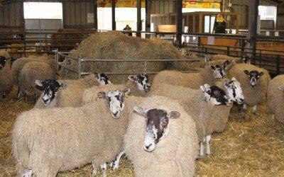 Lambing time again!