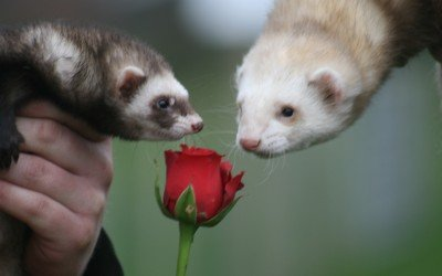 valentines day animals february 14